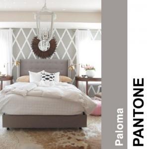 Paloma1 Paloma11 300x300